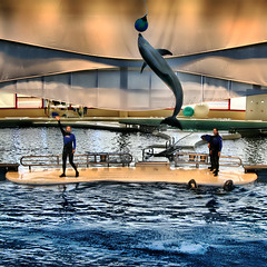 Our Ocean Planet (` Toshio ') Tags: show blue people woman man water pool animal mammal aquarium high jump jumping globe waves earth dolphin air curtain tail performing maryland baltimore perform dorsel fin hdr nationalaquarium grandopening porpoise toshio dolphinshow nationalaquariuminbaltimore abigfave highdynamicresolution aplusphoto platinumheartaward ouroceanplanet thenewdolphinshow