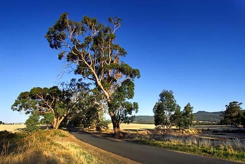 Newham, Victoria, Australia IMG_3250_Newham