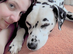 Dawn with Eddie the dalmation (goreckidawn) Tags: dog cute dogs woof animal four furry legs cuddly legged