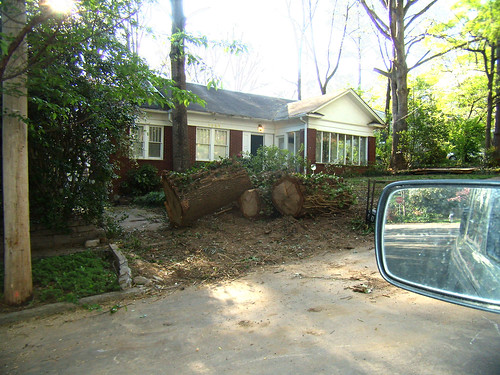 P4162615-Reeder-Tree-Crunch