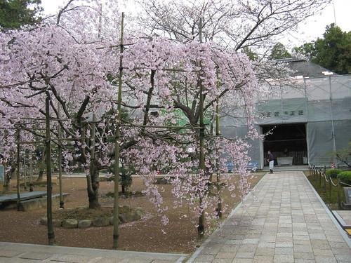 Day05 - 01 - 国分寺 (Temple 29)