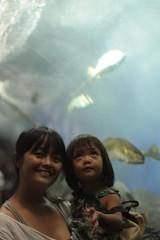 in the aquarium's tunnel