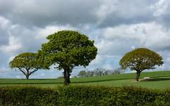 THREE TREES (nannywitch2) Tags: best photosandcalenders heartsaward dragongoldaward fabulousflicks photographersgonewild addictedtophotographs