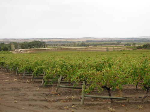 Barossa valley vinyard