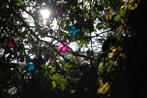 the pink and blue in the trees (Jess pointed out this shot)