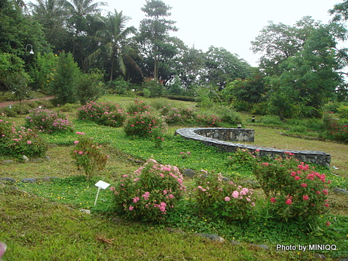 花園迷宮@台東知本東遊季