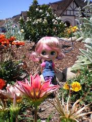 Blythe in Solvang, CA