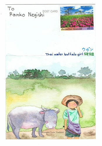 Thai Water Buffalo Girl