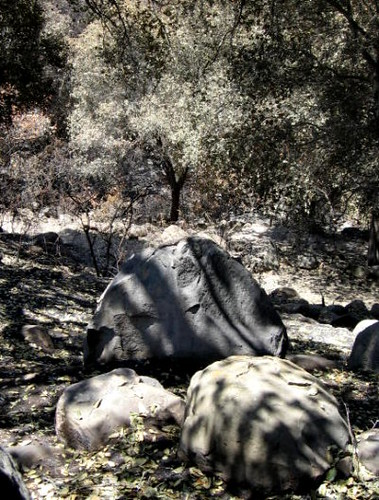 Santa Barbara Botanic Garden Boulders and Ash