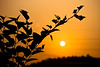 Golden Sunrise of Guanlan (jon.noj) Tags: china orange leaves silhouette golden interestingness explore shenzhen frontpage interestingness6 sunise guanlan nikond80 jonnoj jonbinalay goldensunriseofguanlan