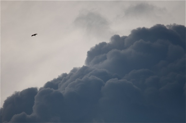 clouds_bird_0150