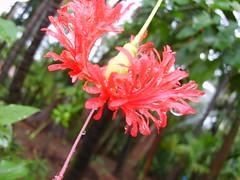 S5004225 (Saurabh Deshpande) Tags: trip konkan