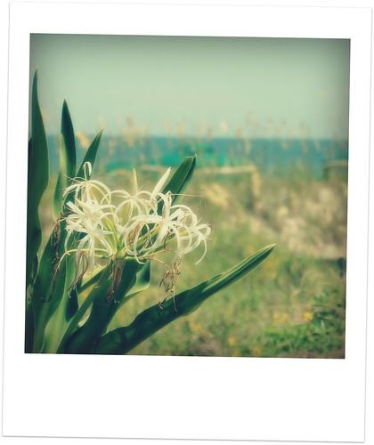 amelia's flower polaroid