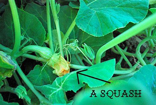 Finally! Squash!