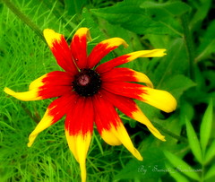 HAVE A BRIGHT COLORFUL DAY (Sunciti _ Sundaram's Images + Messages) Tags: red abstract flower green yellow wow flora 1001nights soe sow bestshot smorgasbord brightspark blueribbonwinner otw kaledioscope 10faves 5photosaday hongkongphotos distellery abigfave enstantane anawesomeshot impressedbeauty aplusphoto agradephoto flickraward flickerdiamond eperke brillianteyejewel concordians awesomescenery flickrestrellas brilliantphotography rubyphotographer fabulousflicks overtheshot abovealltherest alittlebeauty mallimixstaraward artofimages flickrmasterpieces capturethefinest artofatmosphere winklerians