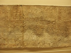 BM_ANE566 (sipazigaltumu) Tags: london museum ancient near antique east bm british mesopotamia basrelief reliefs assyrian antiquit ashurnasirpal antiquite ashurbanipal assurbanipal orthostat assurnasirpal orthostate tiglathpilesar tiglatpilesar tiglatpileser
