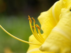 Yellow Flower Closeup
