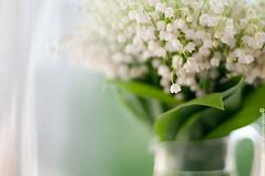 (PblCb) Tags: flowers white green 50mm nikon bokeh f14 lilies bouquet lilyofthevalley convallariamajalis d300s rediby