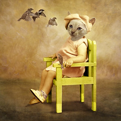 The contemplative girl - La contemplative (Martine Roch) Tags: portrait cute bird cat square costume kitten funny chat antique character surreal sparrow surrealist caractère flypapertextures