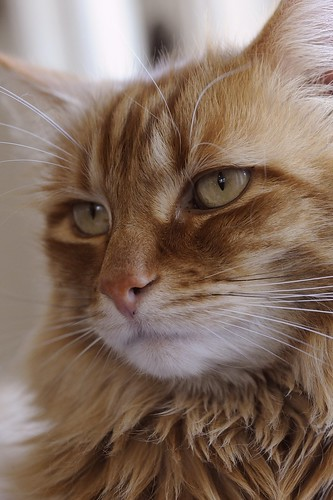 d3 gillie 105mmf28gvrmicro bestofcats