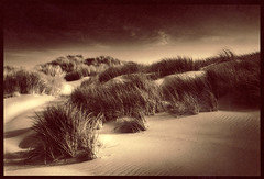 Golden Dunes (isvibilsky) Tags: oregon platinum palladium sanddunes alternativeprocess altprocess platinotype alwaysexc