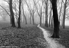 Path in the Fog (Andrew Kandel) Tags: trees bw usa fog landscape dallas woods nikon texas path d200 allrightsreserved whiterocklake copyrighted dallasphotographer andrewkandel missoulaphotographer