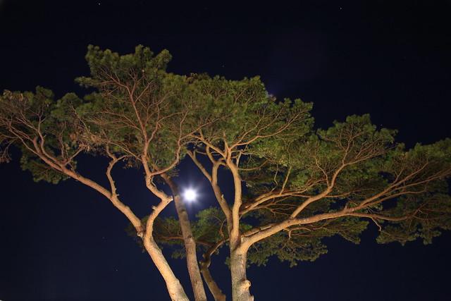 木漏れ月光
