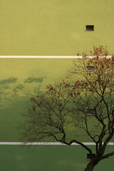 Green Good Morning! (sonofsteppe) Tags: street city morning windows winter light shadow urban white detail building tree green art geometric field lines playground vertical wall architecture modern facade 50mm mural hungary exterior estate outdoor background budapest explore series visual exploration thewall blockhouse fragment bough ilmuro wallscape branchy sonofsteppe pusztafia zugl jellegfa pillangpark urbanlifeoftrees