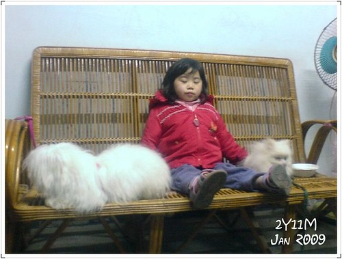 夏皮與狗04