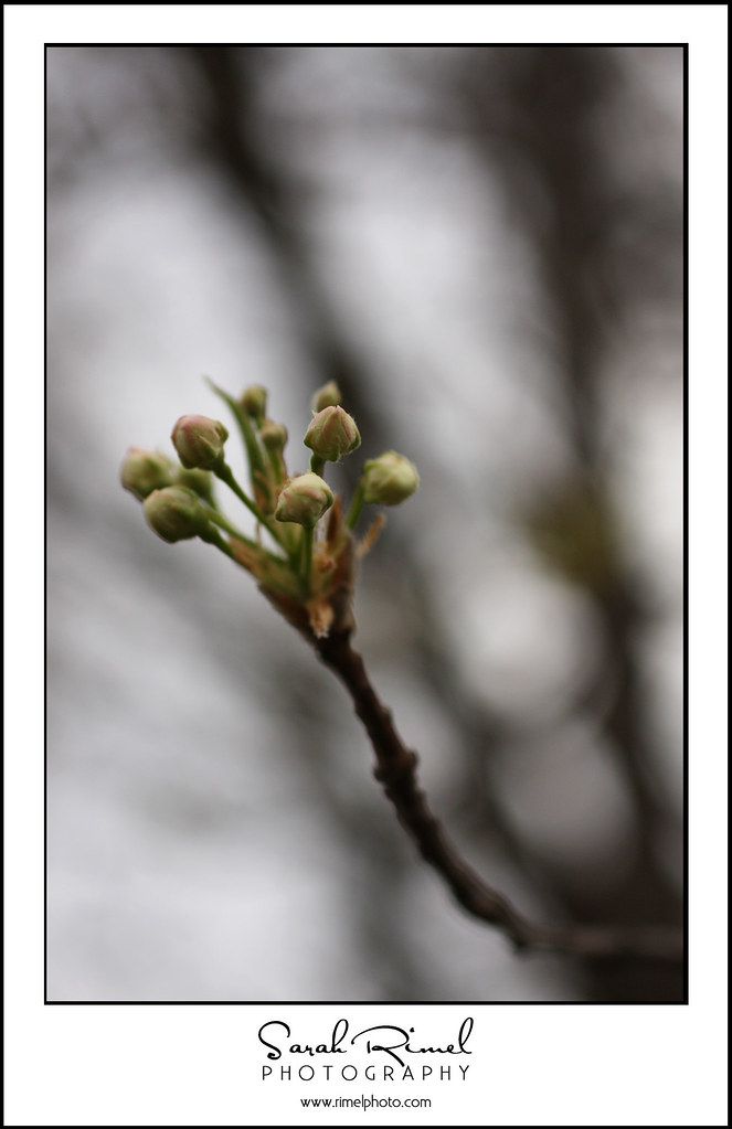 buds and blooms 02