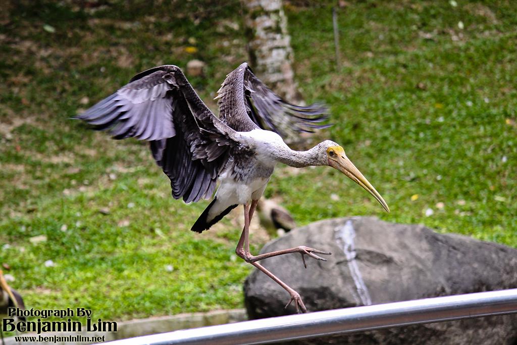 birdpark1_35