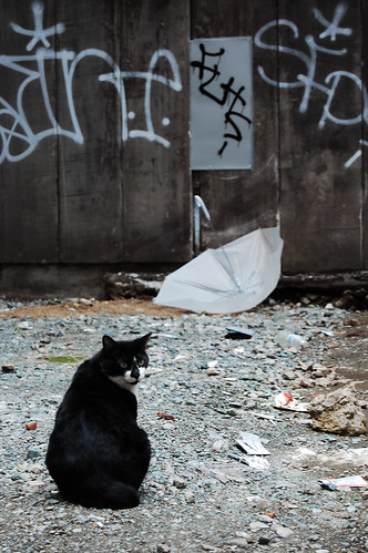 Gato y paraguas class=