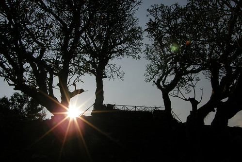 62.夕陽與樹影