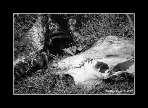 Muerte en el Campo