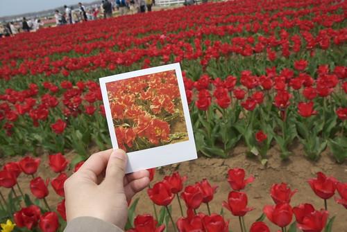 with Polaroid