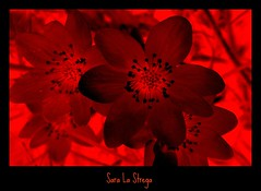 The Color of My Life.... (Sr l Strg) Tags: red nature rouge noir witch dream rosso strega sorcire colorsofthesoul