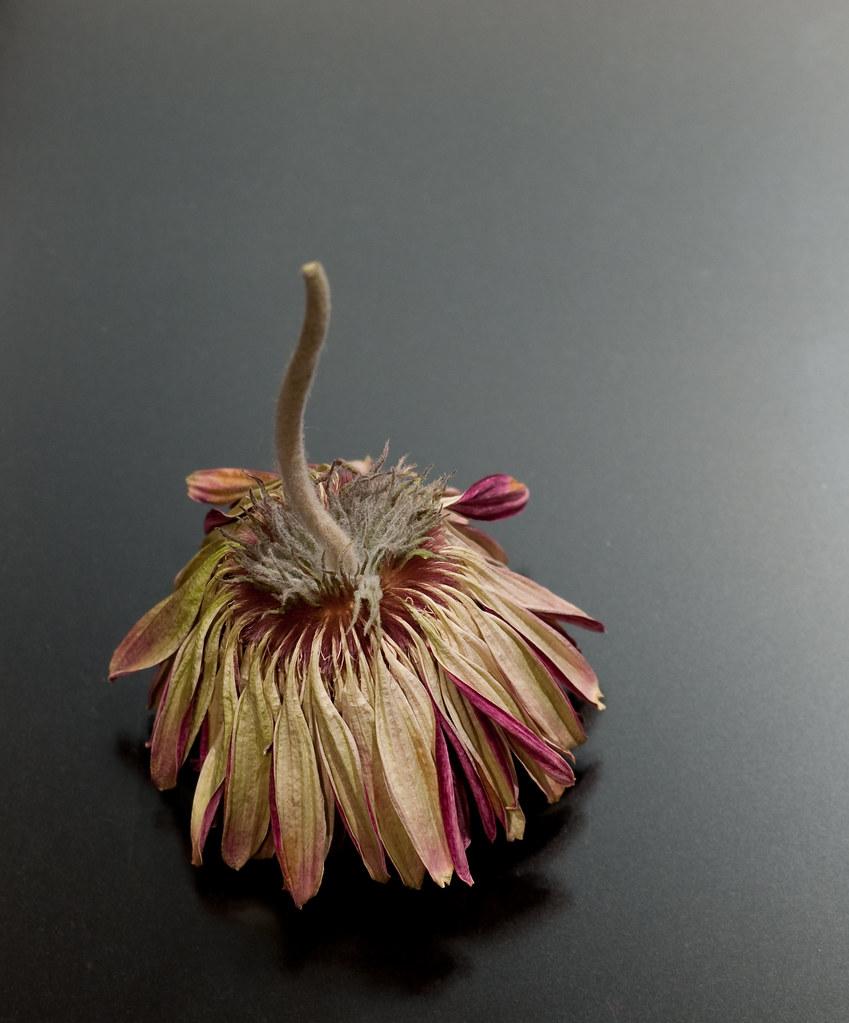 flower series e