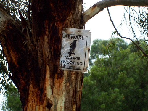 Beware Of The Magpies!