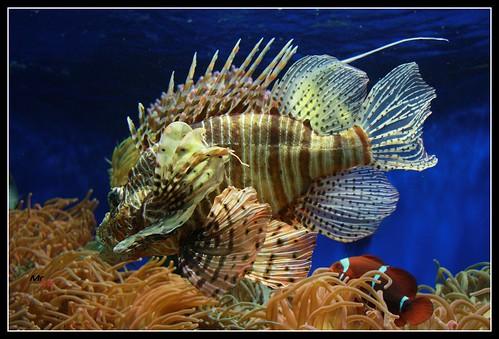 Aquarium in Monaco