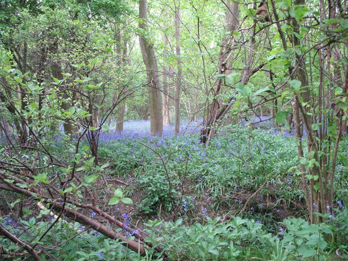 Gransden Wood