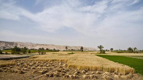 P1040211_Luxor_Colossi_Of_Memnon