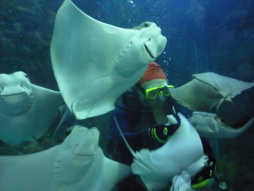 Day 2 Aquarium 004