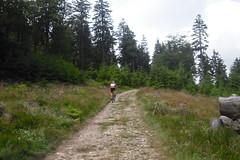 Altknig (karsten13) Tags: feldberg 27062009