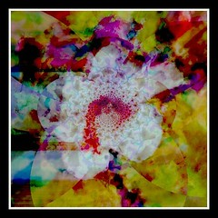 flower (billlee2330 (Casey T. McClain)) Tags: flowers psychedelic skelletons awardtree