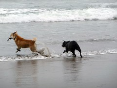 Can't have it! (pipercat99) Tags: fortfunston southsanfrancisco