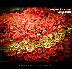 Bangalore Flower Show at Lalbagh (abhiomkar) Tags: red roses india flower yellow garden day bangalore glasshouse flowershow lalbagh independece canons3is bangaloreflowershow
