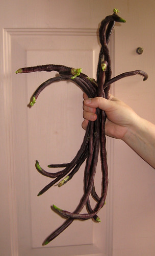 Purple Yard Long Beans