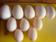 Goose eggs, duck eggs, chicken eggs