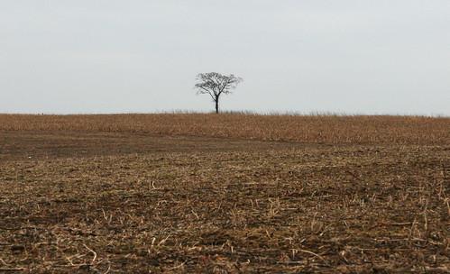 NJ - 13 - tree