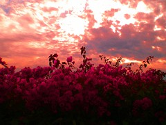 Heaven and Earth (Majdy) Tags: california sky flower sandiego redflower sandiegoconventioncenter heavenandearth